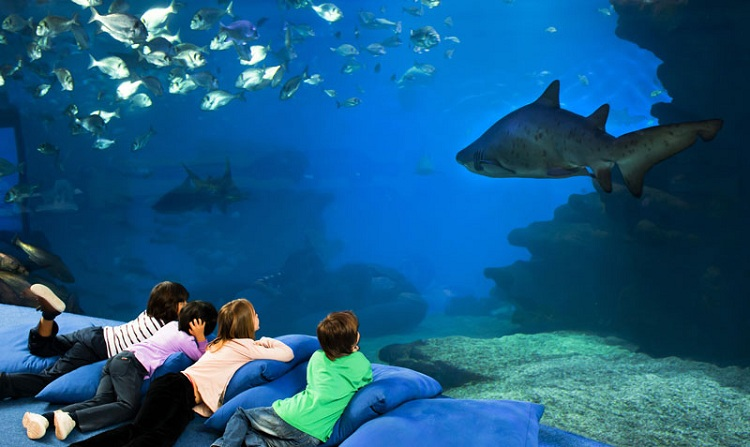 Palma Aquarium kids activities Majorca shark sleepover