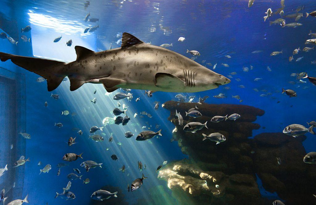 Palma Aquarium shark tank